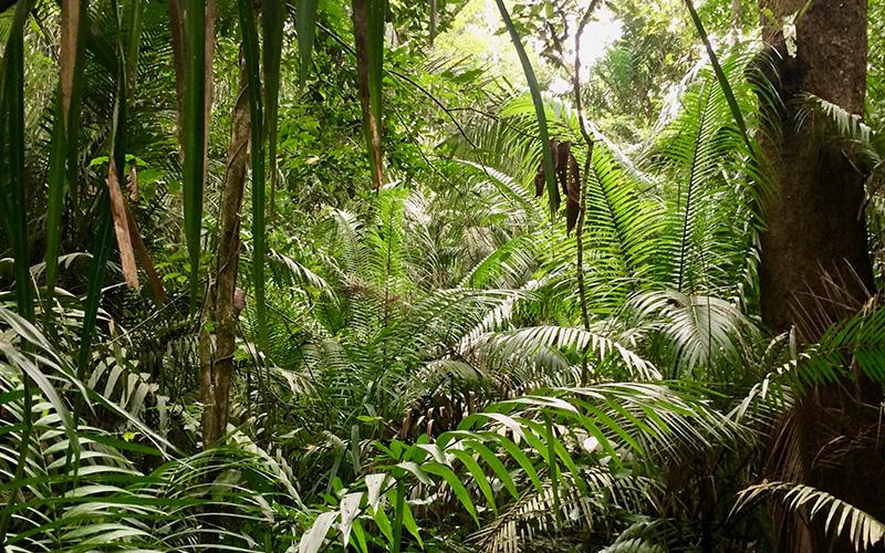 Supervivencia en la selva